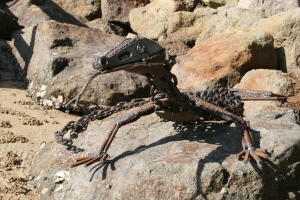 goanna2 on rocks